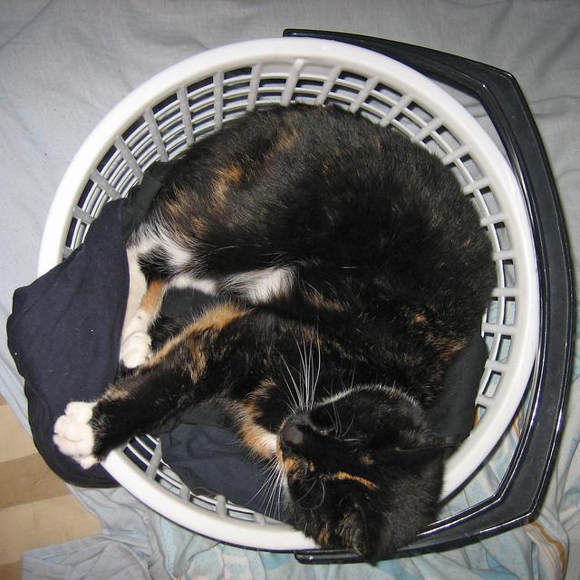 Tindra, a basket case?