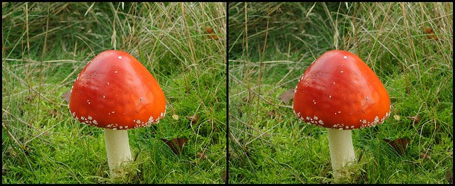 Fly agaric -  3d cross-view