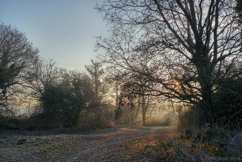 2017 oru uk surrey hersham hershamriversidepark morning walk path tree sunshine sun winter cold park sunrise mobilephotography