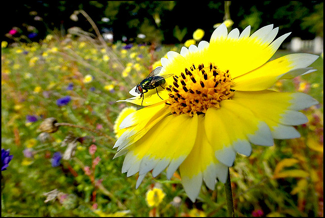 The fly and the flower.