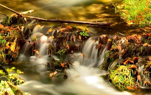plants fall mi waterfall rocks clean clear fernridge sevenbridges rapidriver october2015