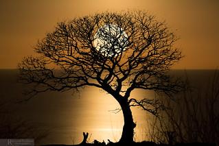 Moonglow.