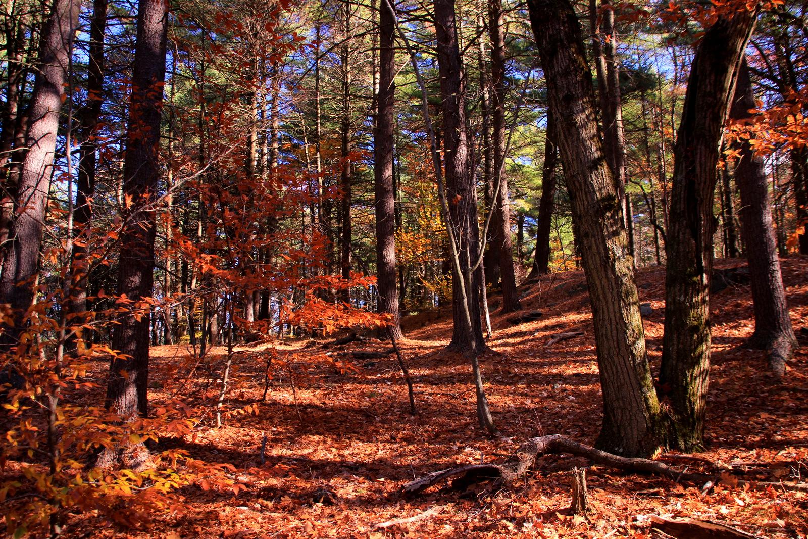Fall 2015, Blue Hills Reservation, Novmeber 8, 2015