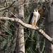 Flickr photo 'Peregrine Falcon (Falco peregrinus)' by: Mary Keim.