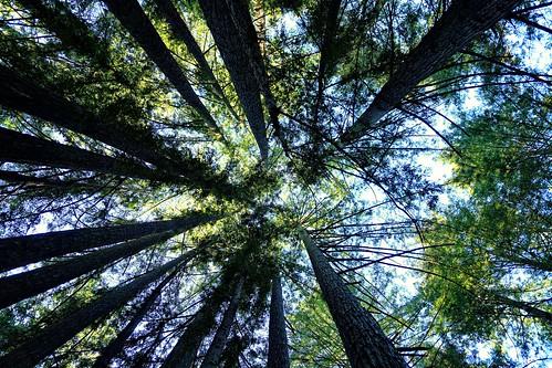 tree nature forest redwood landscape