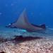 Indonesia - Flores, Komodo (8/2015) - Underwater/Podvodnický