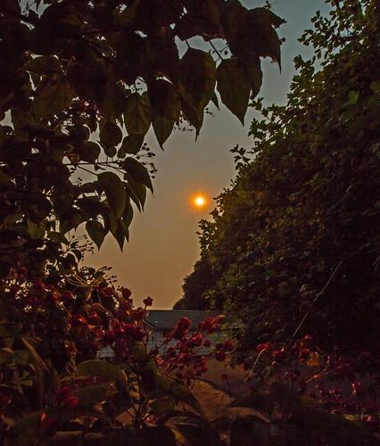 sun nature oregon sunrise smoke smokeysky rainieroregon