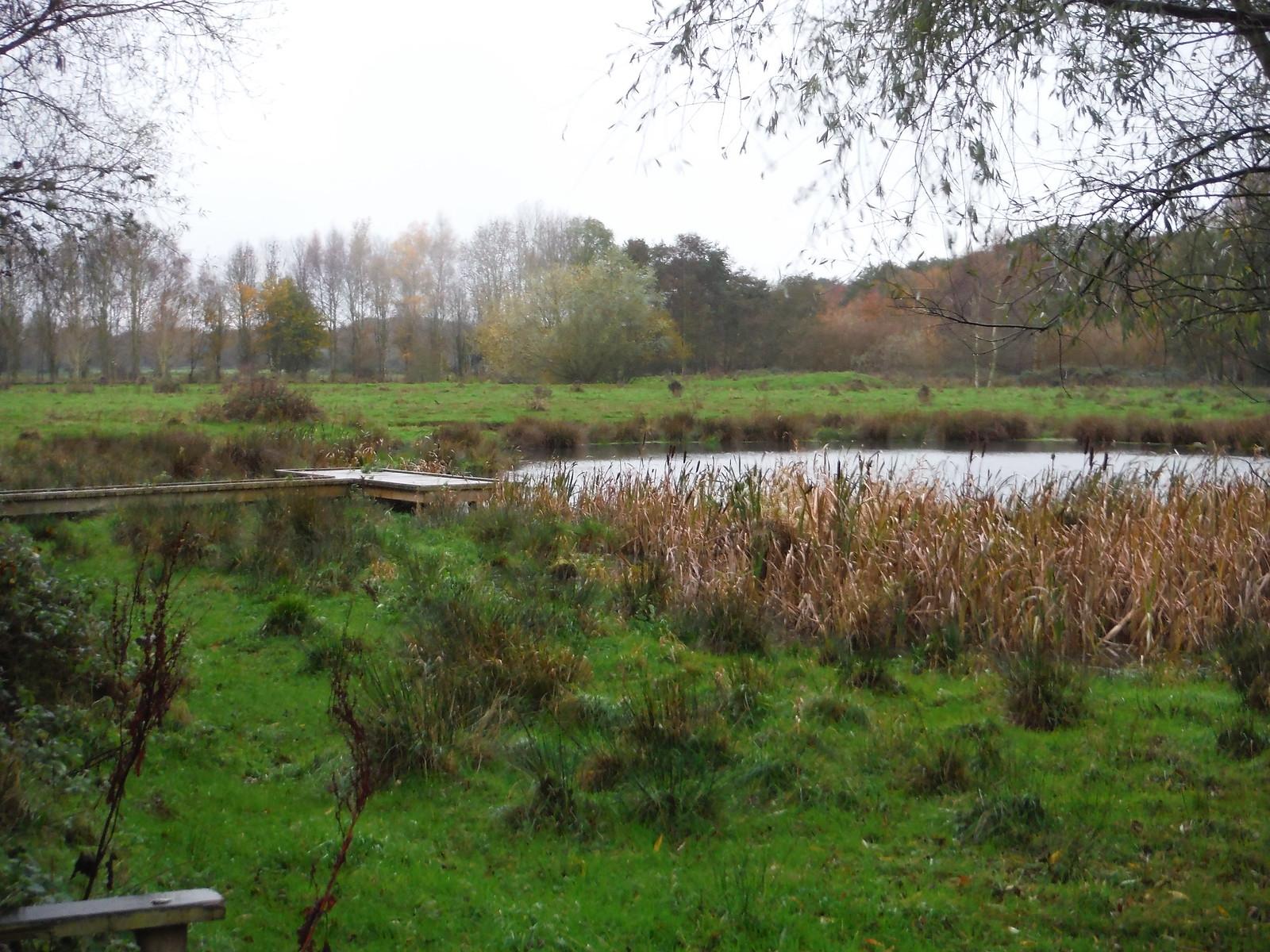 Pond in Flitton Moor, Flitton SWC Walk 232 Lidlington to Flitwick