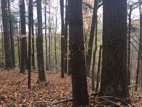Matt has marked the timber for harvest, this is the homesite area