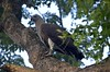 eagle by monzur.hassan