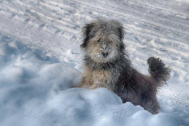 Χιονο...Μπαλού Snow...Baloo