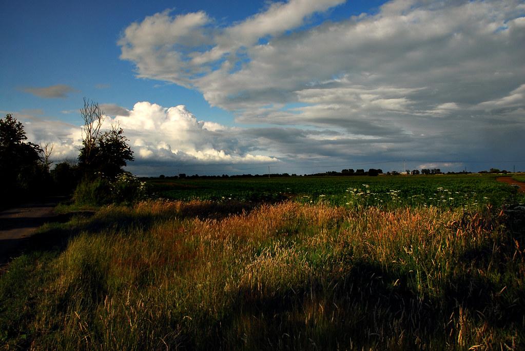 Walland Marsh - Coldharbour Lane (Explored 07.10.2015)