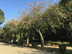 #nature #TagsForLikes.com #sky #sun #summer #beach #beautiful #pretty #sunset #sunrise #blue #flowers #night #tree #twilight #clouds #beauty #light #cloudporn #photooftheday #love #green #skylovers #dusk #weather #day #red #iphonesia #mothernature#lahore
