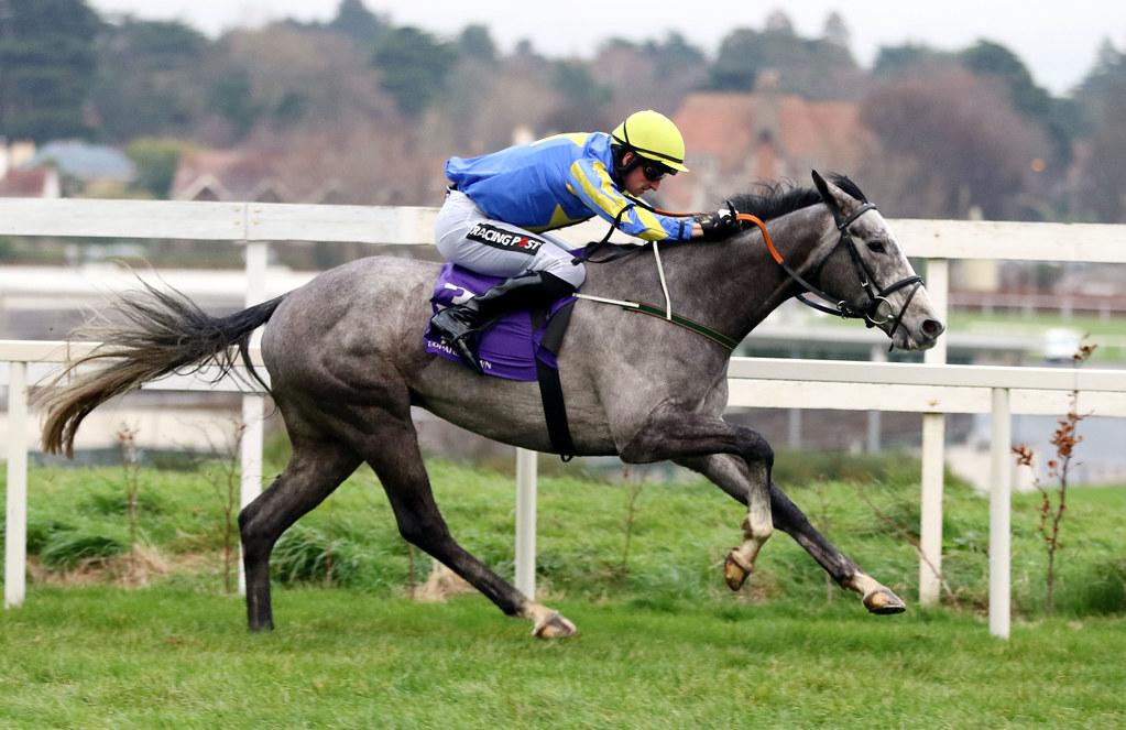 Image result for debuchet horse
