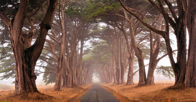 Magnificent in Mist