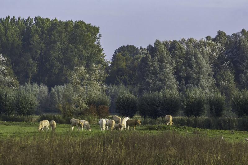 Ook dit is de Biesbosch
