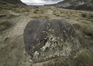 Lichenography