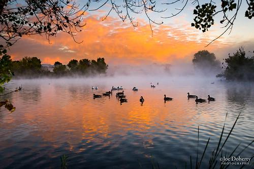 birds fog sunrise los angeles sepulveda dam losangeles sepulvedadam