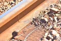 秋、線路に落っこちていました by Noël Café