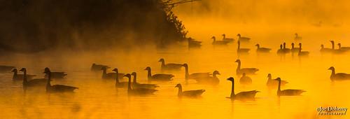 orange birds fog explored sunrise los angeles sepulveda dam losangeles sepulvedadam