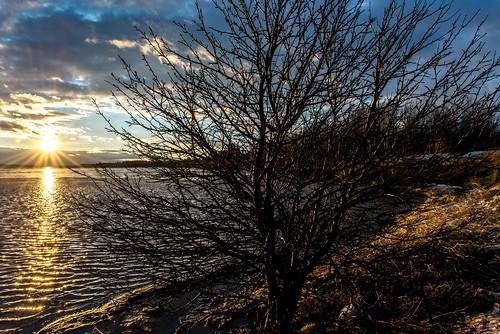 canada light shawnharquail sunset travel blue shawnharquailcom tree water newbrunswick