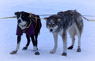 """I'm so tired"" - Dog Mushing - Alaska 