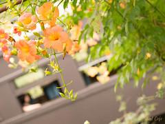 夏の車窓 by Noël Café