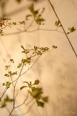 Green & Shadow by Noël Café