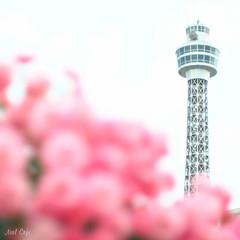 ばら色タワー by Noël Café