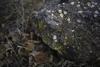 Hi-viz lichen