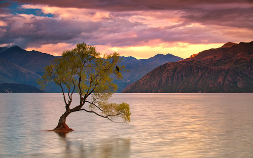 sebastianwarneke wanaka lake new zealand tree thatwanakatree sunset summer canon 80200mm magic drainpipe sky dramatic famous