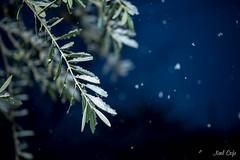 雪降る夜に by Noël Café