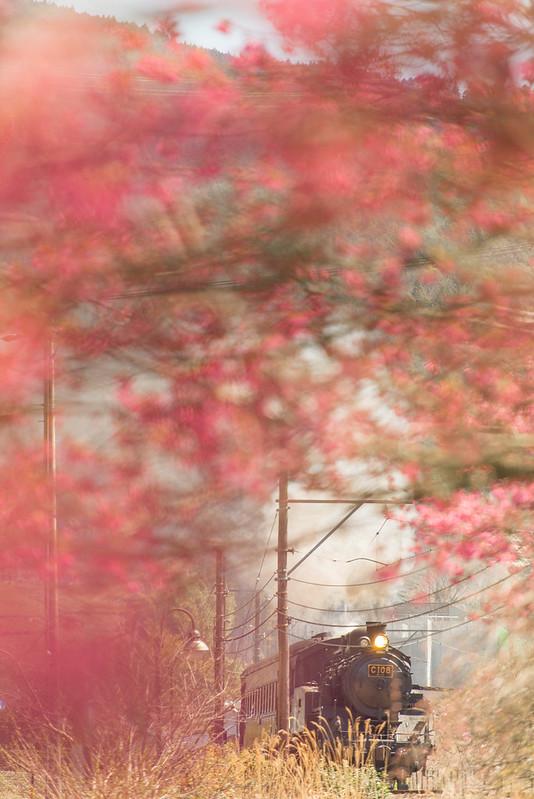 Deep Cherry Pink by Noël Café
