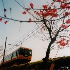 夕方色列車 by Noël Café