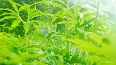 Rainy Green by Noël Café