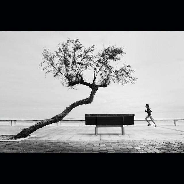 Mathieu's tree