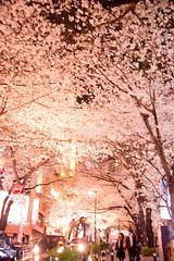 桜坂 by Noël Café