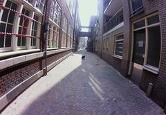alley cat #fisheye