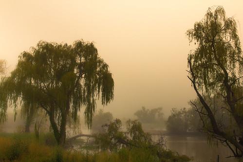 splendid splendour splendor fog greystump jerrabomberrawetlands landscape dawn sunrise canberra wetlands trees australia copyrightcolinpilliner countryside toggreystump