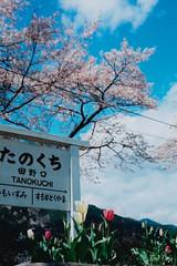 たのくち 春 by Noël Café