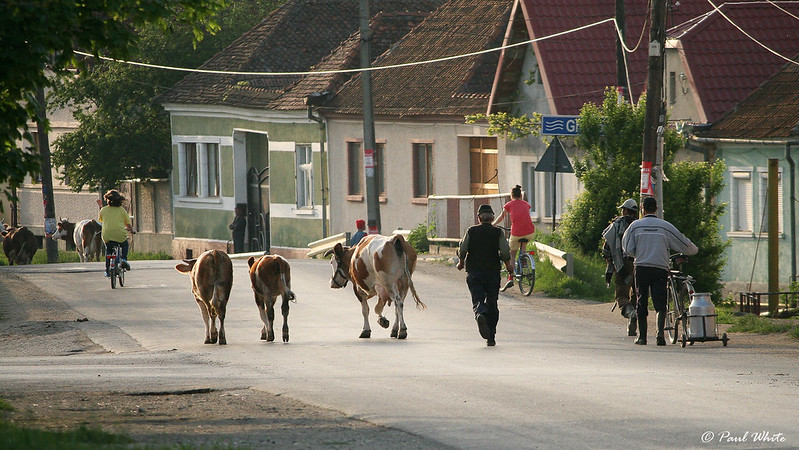 Village scene in Transylvania