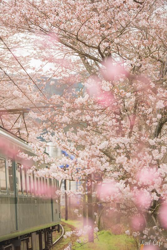 電車のお花見 by Noël Café