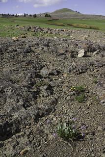 I love rock gardens