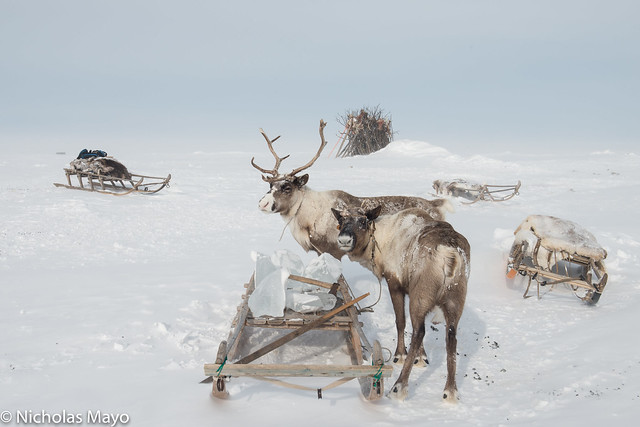 Reindeer & Sledge With Ice