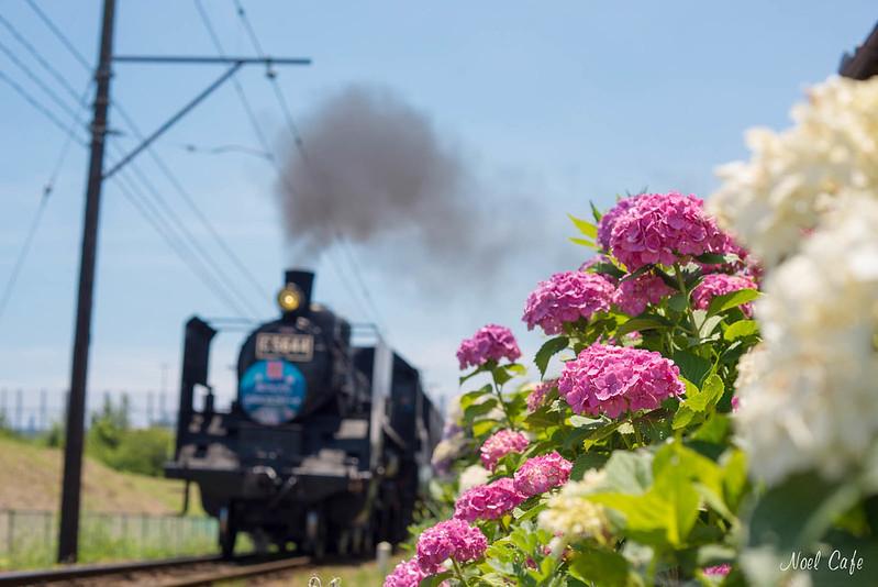 A Steam Locomotive & Hydrangea by Noël Café