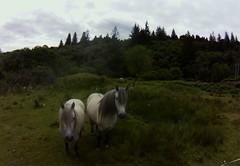 horses near Oban