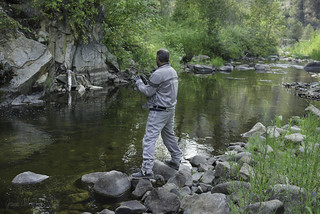 Salmon shooter
