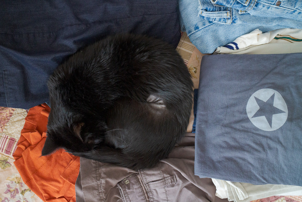 Our cat Emma sleeps on clean laundry on the guest bed next to a Daring Fireball t-shirt in September 2014