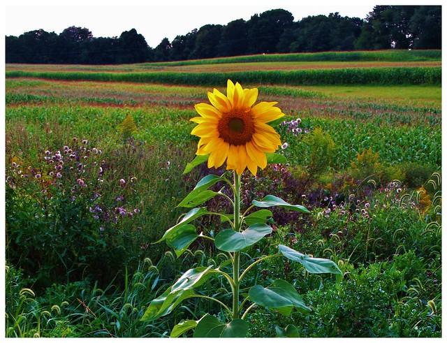 Pennsylvania Countryside @ Dayton, PA (Smile on Saturday)