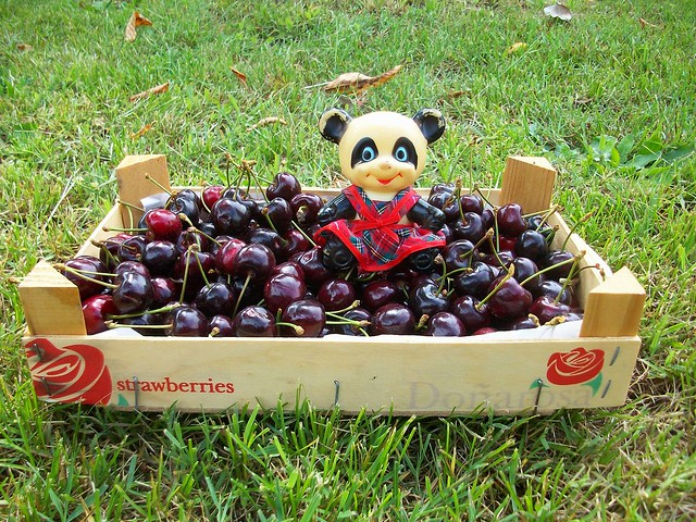 The cherries / Le ciliegie
